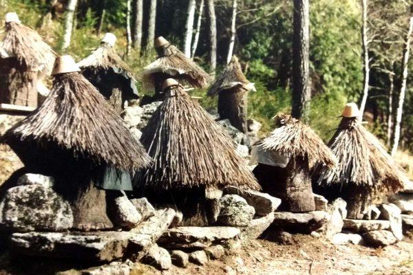 Corticos-eco-aldeia